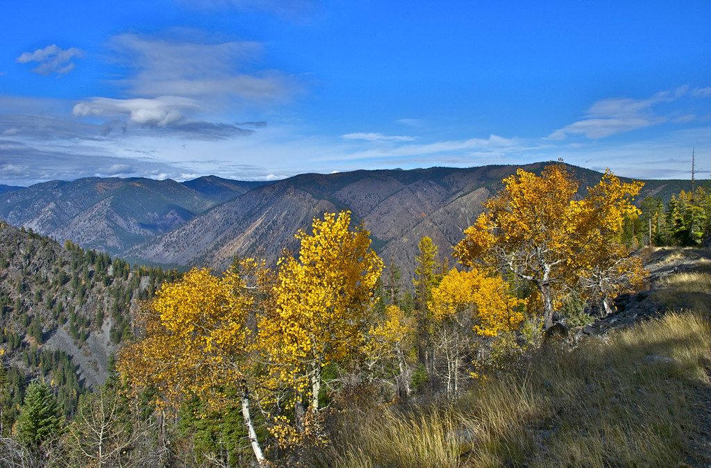 Aspens up toward Cherry Peak