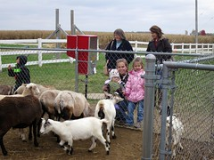 agriculture, farm, mammal, goats, domestic goat, herding, pasture, rural area,