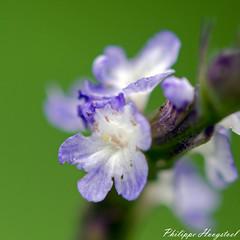 flower 20141023_45947