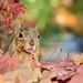 squirrel DSC_4790