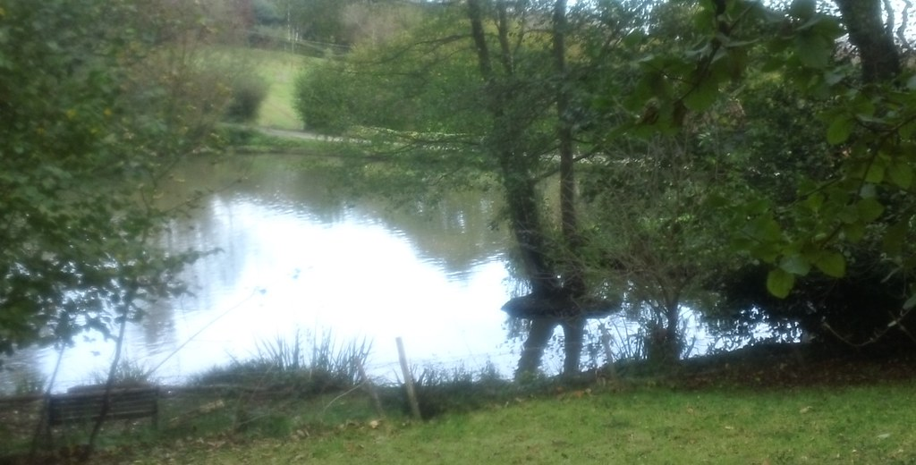 Shimmering pond