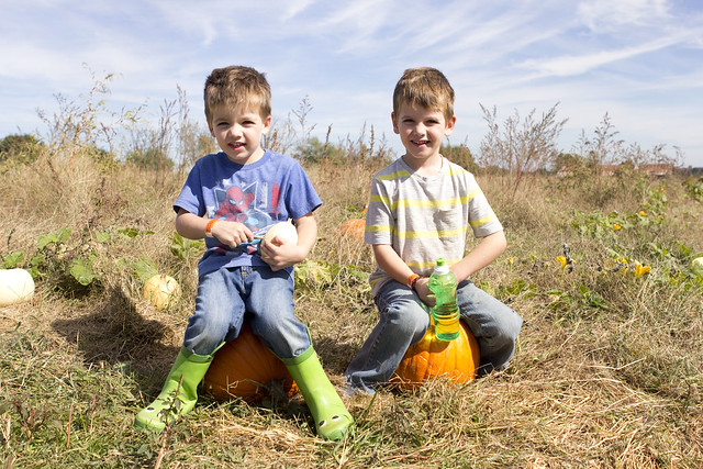 2014pumpkinpatch_adollopofmylife_59