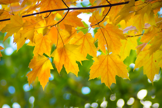 Fall, Autumn, Colors, Leaves, Leaf, Yellow, Orange, Green
