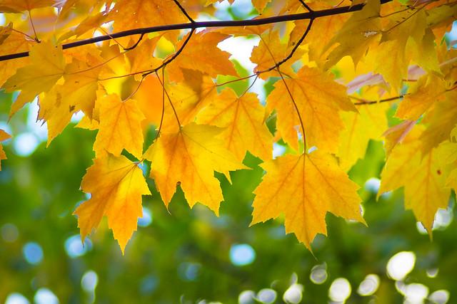 October Canopy