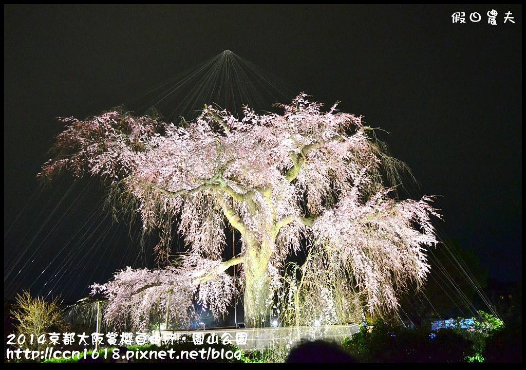 2014京都大阪賞櫻自由行.圓山公園DSC_0669
