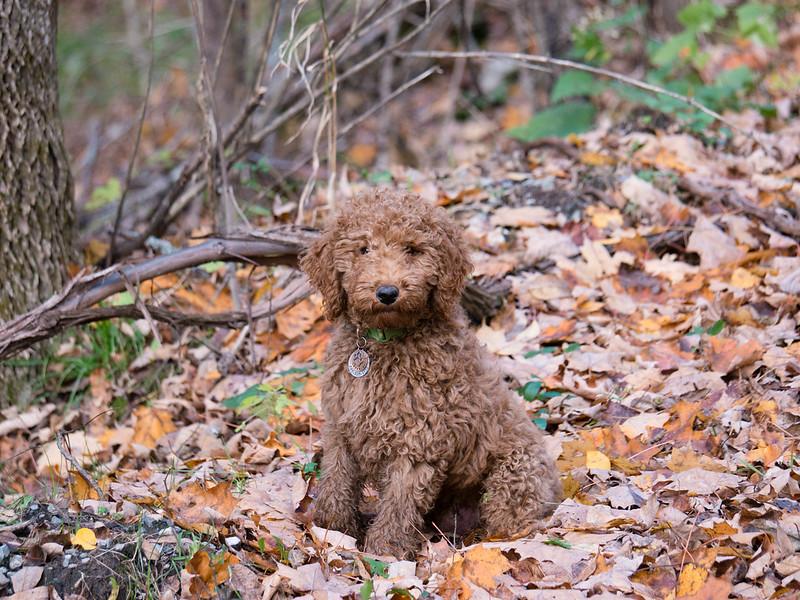 October pup