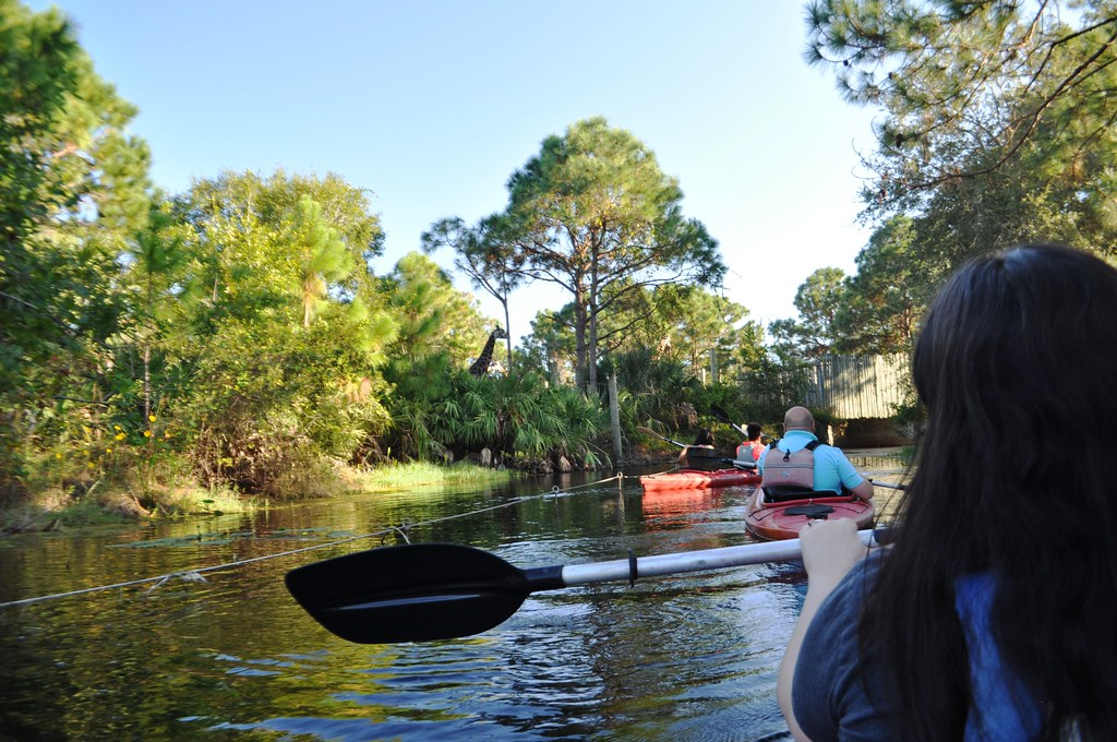 Kayaking By Giraffes - Brevard Zoo, Melbourne in Florida's Space Coast, Nov. 7, 2014