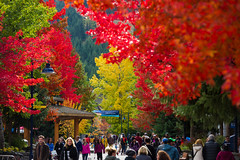 Stunning fall colours in Whistler Village