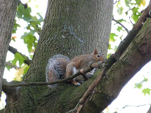 """écureuil sur l""""arbre"""
