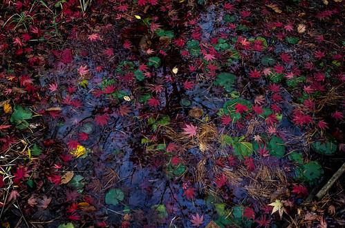 Autumn Color 5