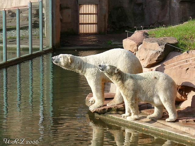043-20061109-Felix & Vilma9