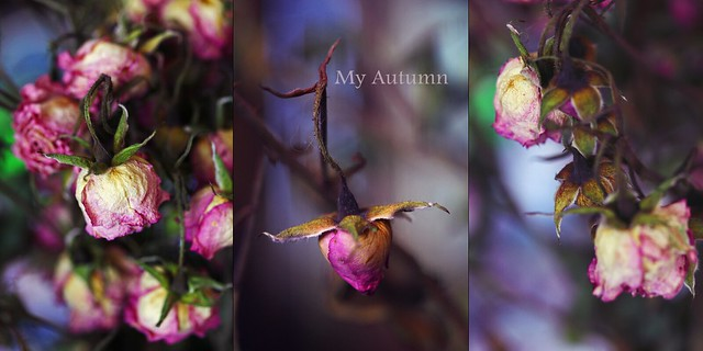 My Autumn