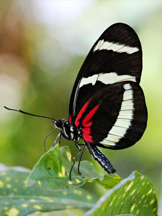 091014_01_butterfly04
