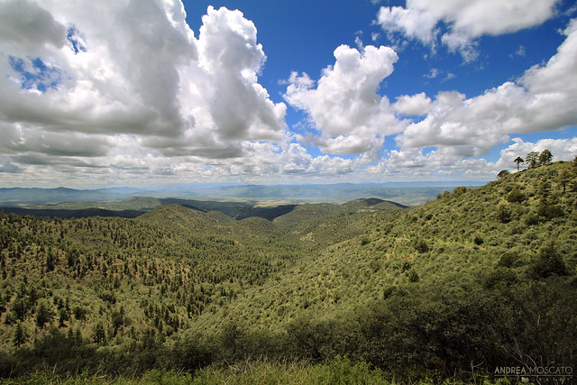 Andrea Moscato - Coronado Trail, US Route 191 Scenic Byway - Arizona