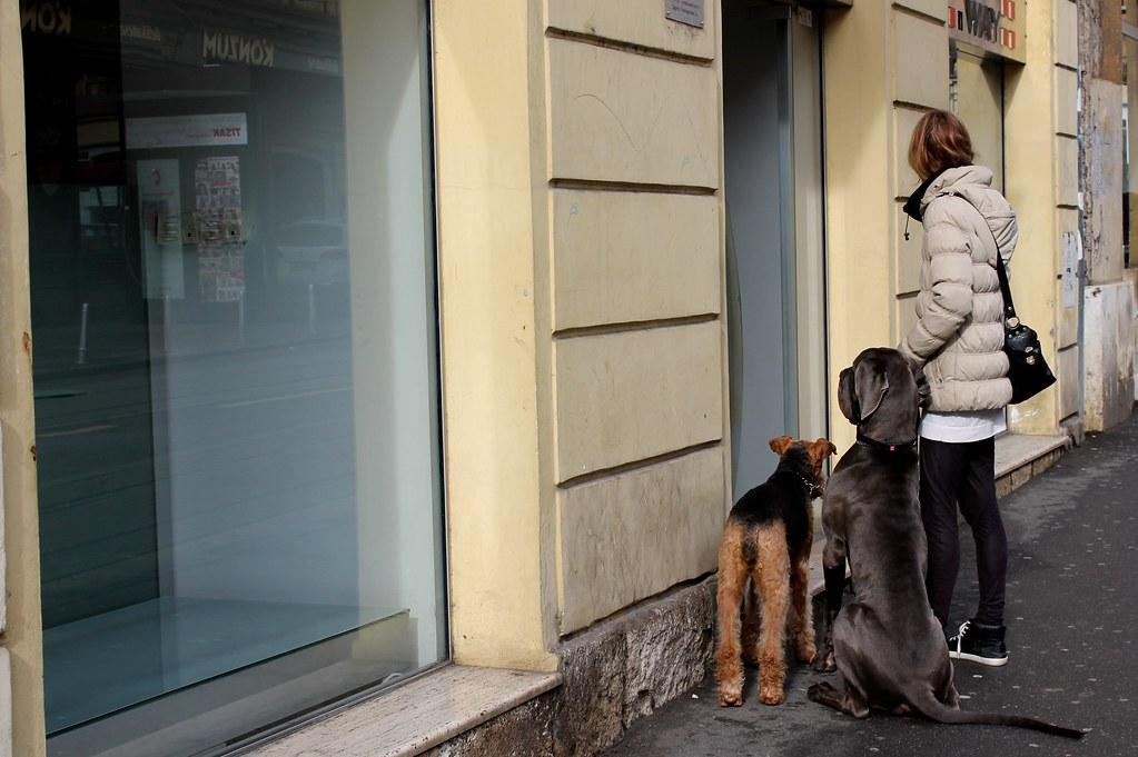 big dogs in zagreb