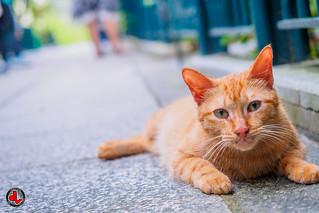 Garden Meow