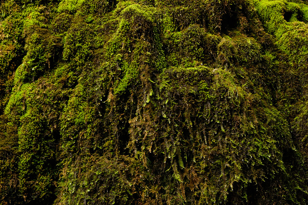 A moss-covered weeping wall in the Columbia River Gorge