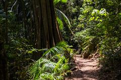 Gold Coast - Tamborine Mountain Rainforest