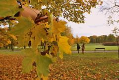 Polish autumn, jesień