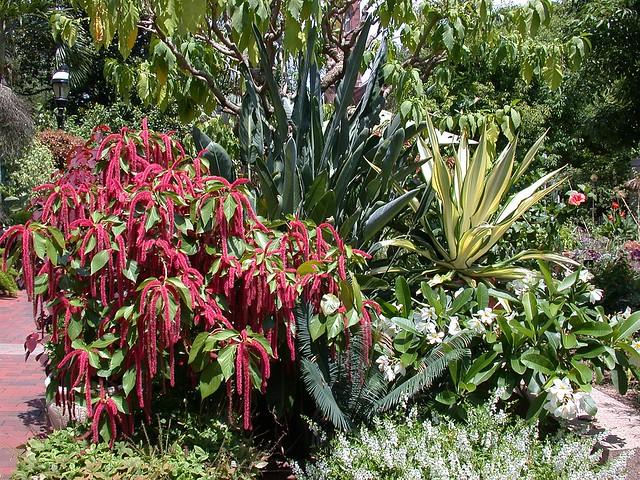 Tropical container garden