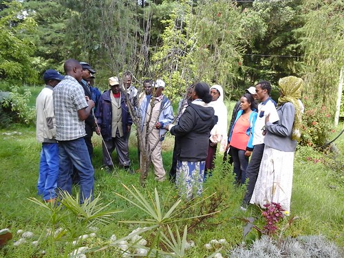 Practical training on apple tree management and scion selection at Holeta ARC (Photo:ILRI\LIVES)