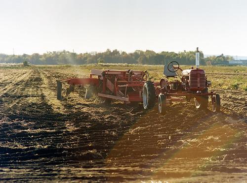 new york sun ny tractor color film landscape florida kodak farm farming onions bronica flare portra400 etrsi 150mm35