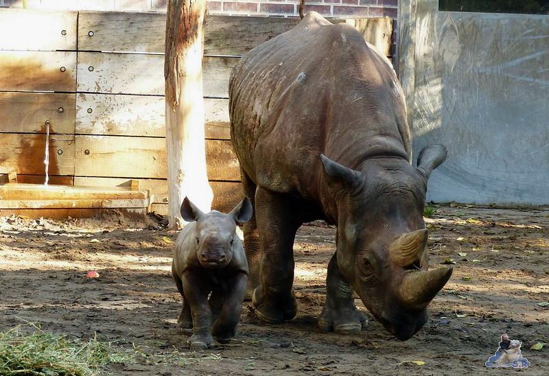 Berliner Zoo 29