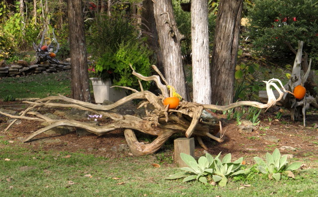 Pumpkins in the stumpery