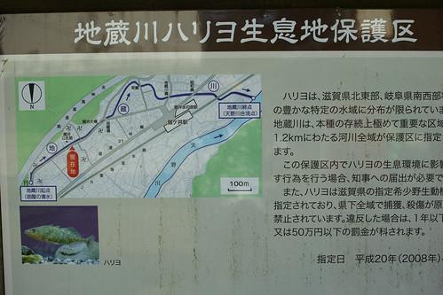 地蔵川ハリヨ生息地