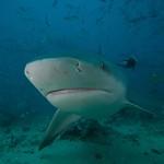 Fiji_Diving_5286