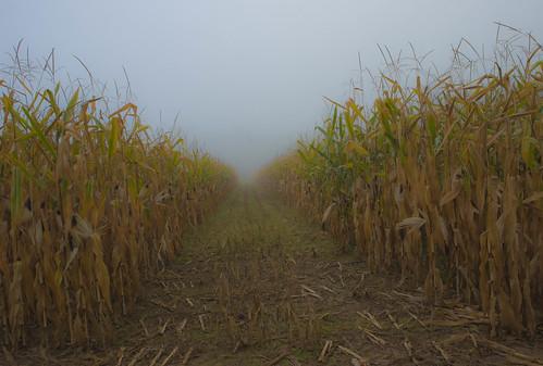 nikon agriculture d800