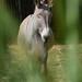 Esel im Vallée des Singes