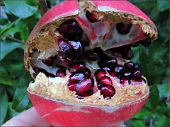Split Pomegranate