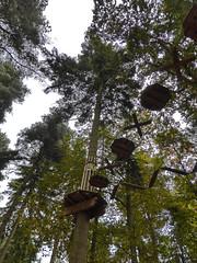 Thetford Forest Oct 2014