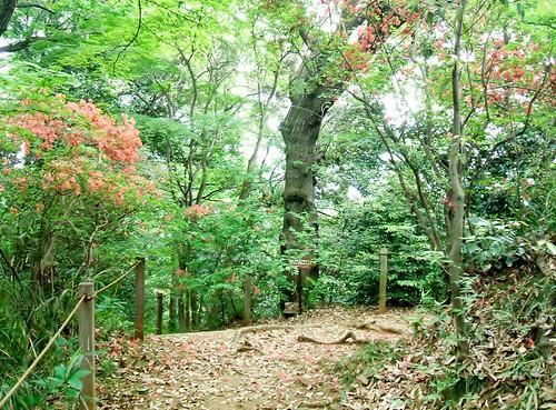 京王百草園の様子(2)