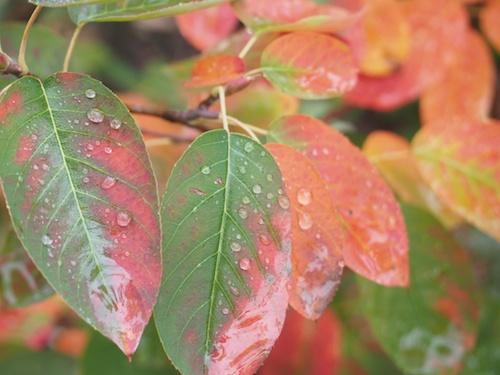 elderberry changing