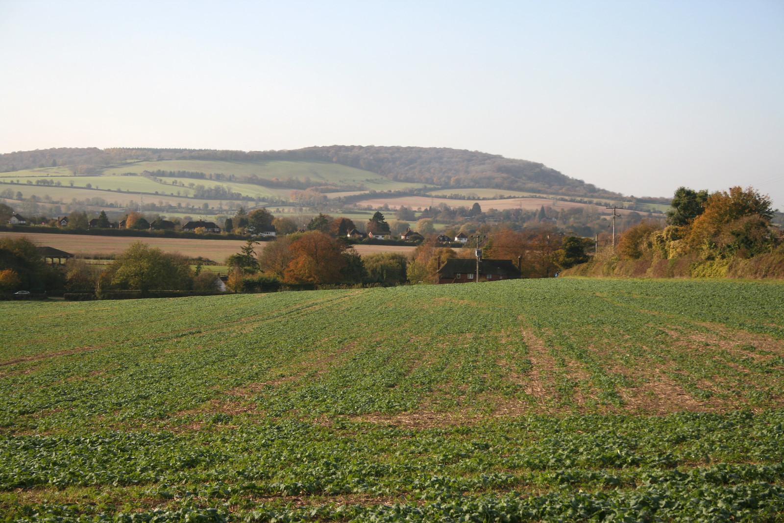 The Ridgeway near Princess Risborough