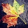 Autumn! #fallcolor #london #rain #lookingdown