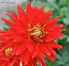 Flower (128)