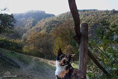 Shelly-Ann ✦ Autumn Cat ✦