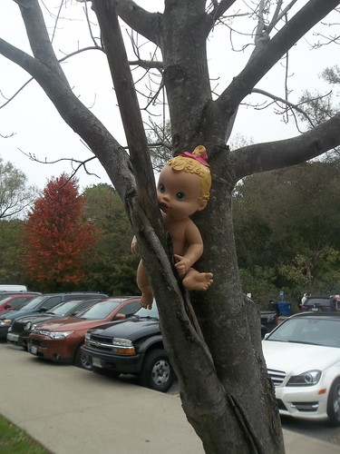 Doll stranded in tree, High Park, Toronto