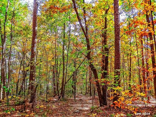 usa fall ga georgia geotagged woods flickr ngc scenic stonemountain photostream 2014 dekalbcounty whitetrail 30086 stonemountainparkga houckster hx9v sonydschx9v sony4286848243843359