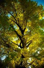 """Cincinnati – Spring Grove Cemetery & Arboretum """"Autumn Curved"""""""