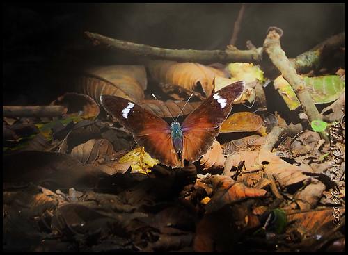 africa luz butterfly rainforest kenya bosque contraste mariposa kakamega