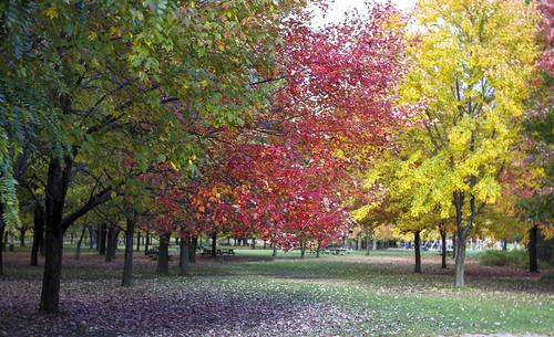 Autumn 3 colors at Parc National des Iles de Boucherville. Montreal, Qu�bec