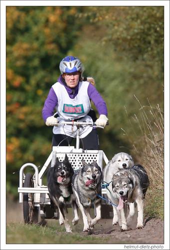 Die Schlittenhunde kommen nach Bielefeld - Senne zur Schlittenhunderennen DM 2014