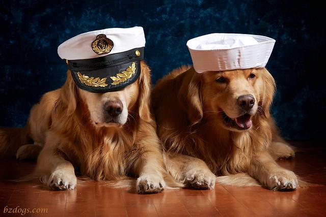 Sea Dogs?