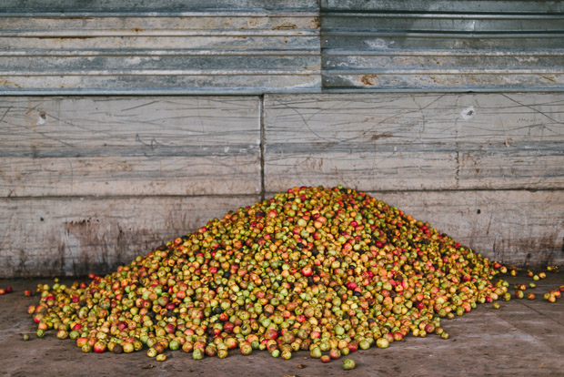 a pile of bittersweet sweet sharp apples cider Bulmers by Sarka Babicka Photography