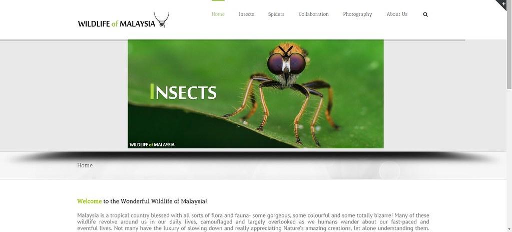 Wildlifemalaysia.com launched!