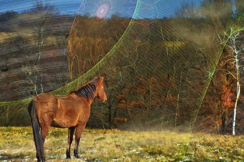 What Horses Dream...